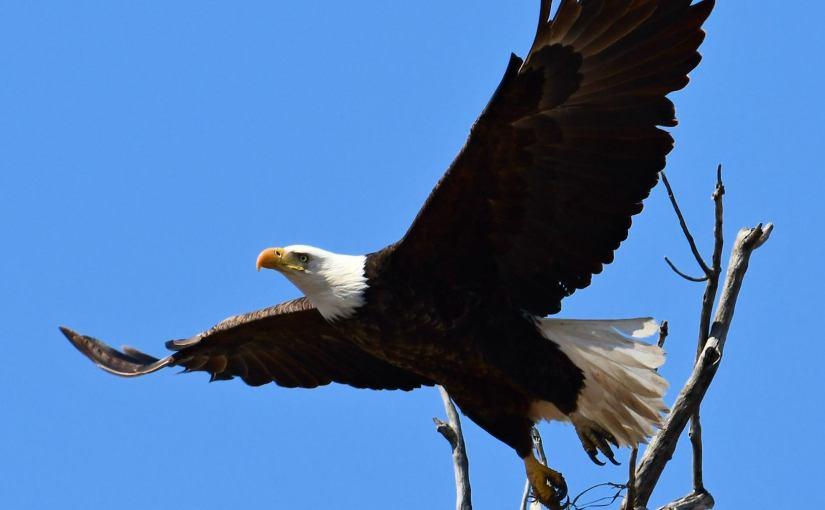 RUSS HONS: Photo Gallery — Birds, Birds, Birds!