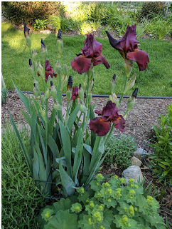 War Chief Iris opened Saturday morning after Friday's heat!