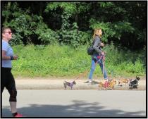 """June 8: I shot this photo Monday of a professional dog walker in the Bois du Boulogne, the large park on the edge of Paris that figures in Marcel Proust's novel, """"A La Recherche Du Temps Perdu."""""""