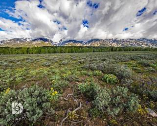 "June 19: ""Wyoming Mountain Floral"": The Teton Valley was carpeted with all kinds of wildflowers. Moving clouds rolling over the Teton mountains added to this scene."