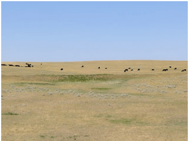 Black Angus cattle, the reason for the hay bales.