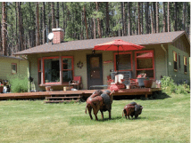 "Prairie Creek Cottage, with her newly acquired bison ""herd."""