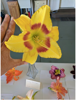 "My favorite was King George daylily. It is huge. I went home and ordered it! As my friend, Bob, says, ""It's addictive."""