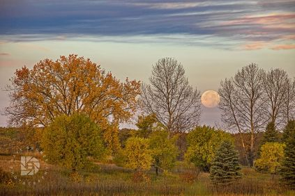 """""""The Harvest Moon and Fall Foliage"""": Took this image Friday morning just as the moon was setting in the west and just before the sun rose from the east. Had beautiful fall colors and some clouds in the sky to complete this landscape."""