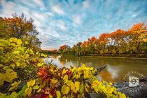 """""""Fall Colors Collage"""": The morning sunrise had just hit the tops of the trees on the opposite bank in this image. The interesting and colorful vines over this log made a nice foreground."""