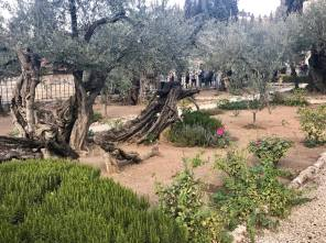 Garden of Gethsemene.