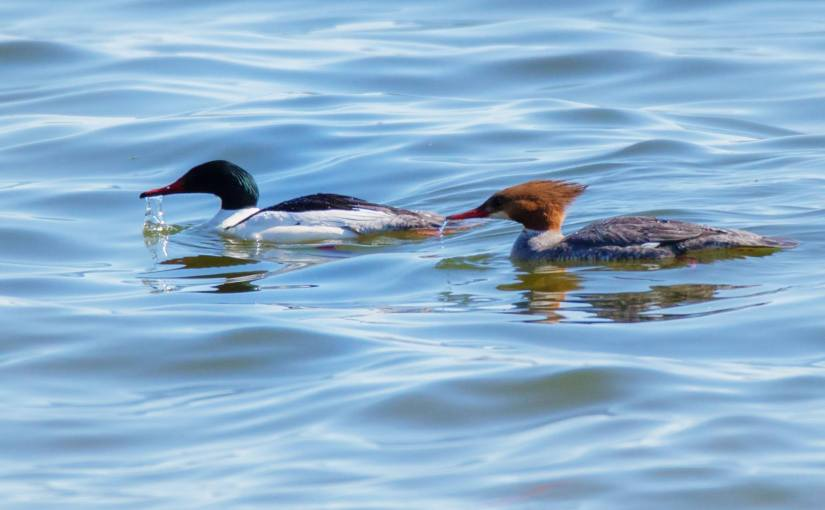 MICHAEL BOGERT: Photo Gallery —Feathered Friends At The Lake