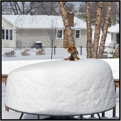 April 16: Dammit! I should have known. A Norwegian troll was responsible for the recent blizzard in Minnesota. He was back at our place in Bloomington this morning to laugh at and mock me.