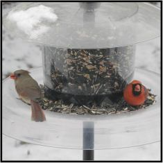"April 2: Say hello to Mr. and Mrs. Cardinal. They were at our feeders this morning, gorging themselves in preparation for the two-day winter snow ""event"" approaching Bloomington, Minn."
