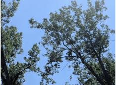 Screen Shot 2018-07-06 at 11.42.14 AM