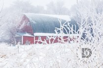 """""""Country Frost"""": We had some nice frost Wednesday morning (Dec. 13), so I ventured out to take some images as we don't see it that often in the Grand Forks area. This old barn surrounded by the frosty trees and foliage became the main subject in this composition."""