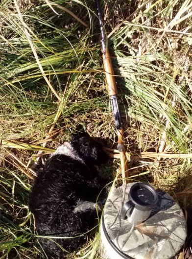 Taking a nap between retrieves in the duck blind.