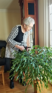 Cousin Jeannette Wolff Miller and her Chrismas cactus.