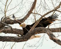 Wildlife around Grand Forks, ND the first week of April 2020. Photo by Russell Hons
