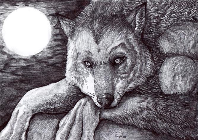 Magányos farkas a telihold fényében.