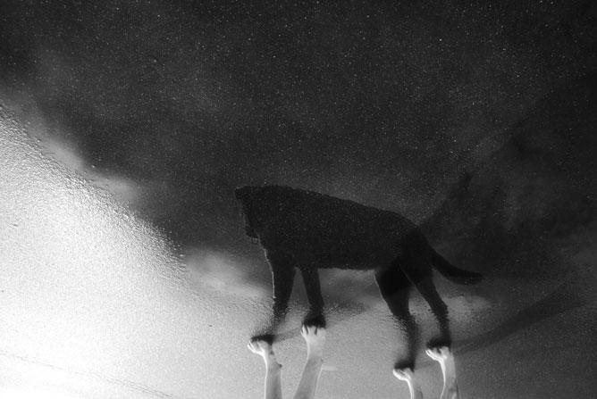 Egy kutya tükörképe a tócsában.