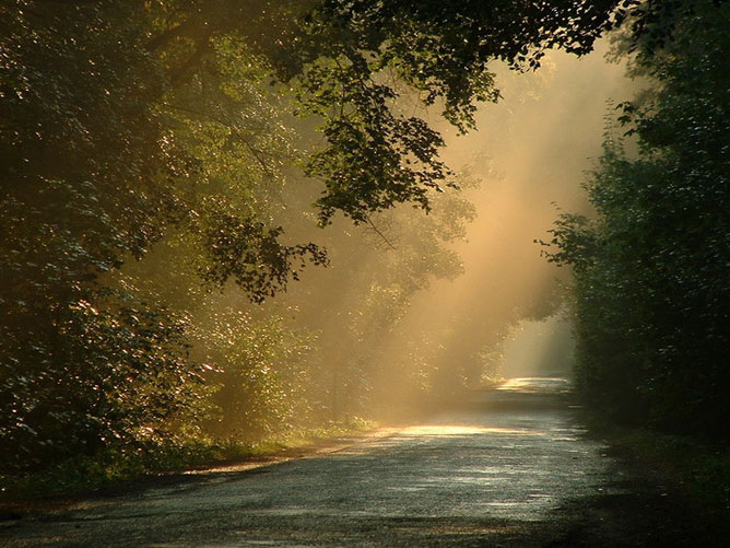 Erdei út a beszűrődő napfényben.