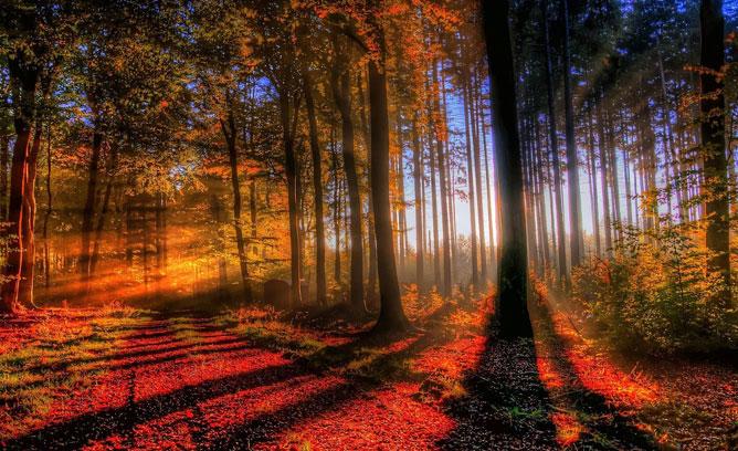 Sejtelmes erdő.