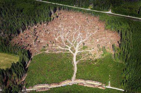 Erdőirtás.