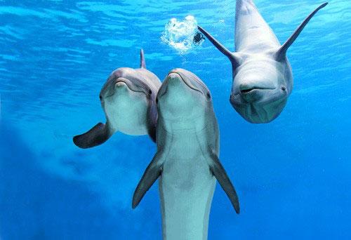 Palackorrú delfin.