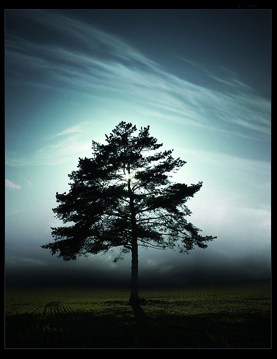 Magányos fa a napfelkeltében .