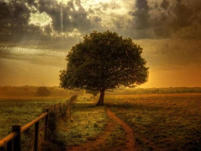 Magányos fa.