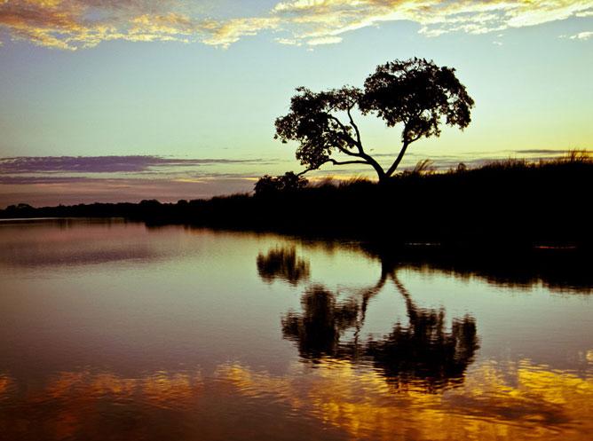 Tükröződő fa az aranyló folyóban.