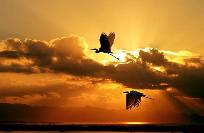 Madarak az aranyló naplementében.