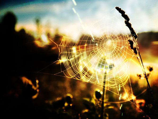 Aranyló pókháló.