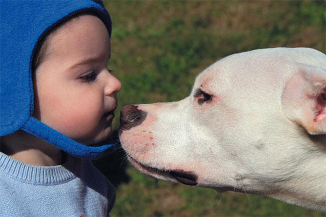 Kutya - ember barátság.