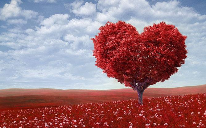 Love -tree.