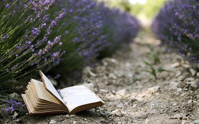 Levendula föld és könyv.
