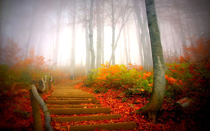 ősz -lépcsők.