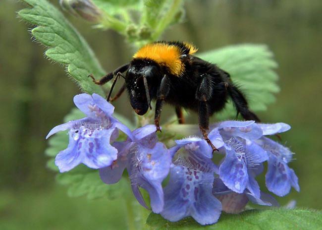 méhek.