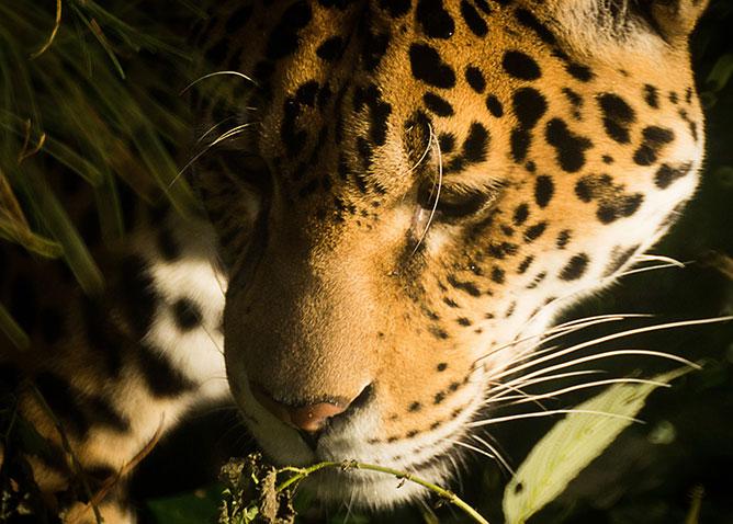 Peru -őserdő.
