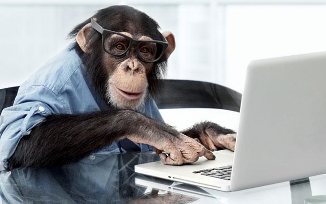 majmok- tudományos kísérlet.