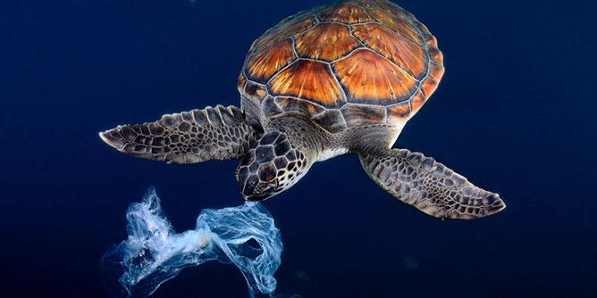 veszélyes, óceánt szennyező plasztikhulladékok.
