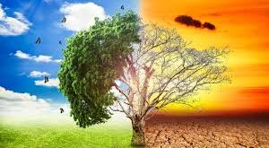 albero rigoglioso e albero spoglio