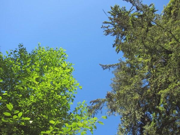 05trees&sky3