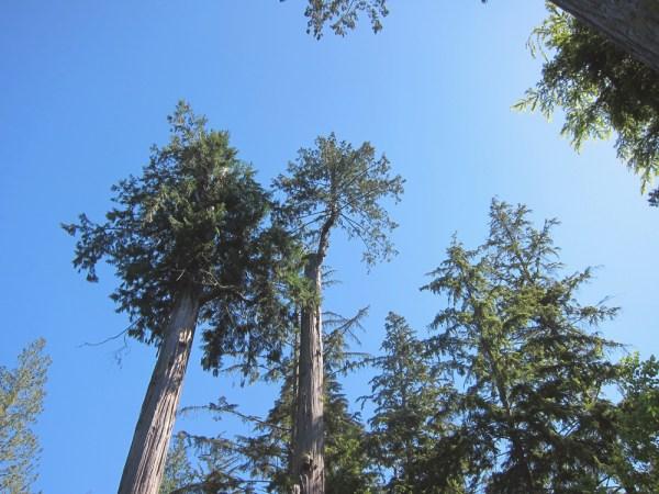 08trees&sky2
