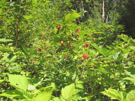 10redberries1
