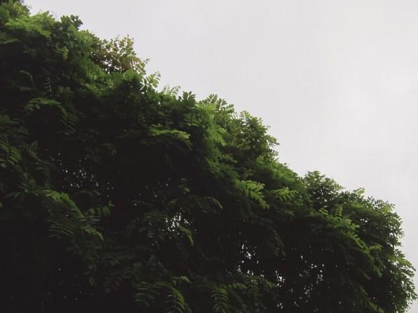 01leaves & cloud
