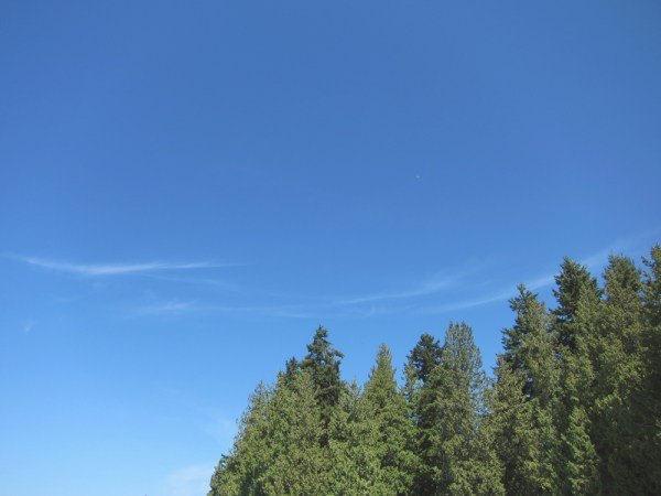 06 trees & sky