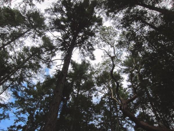 20 trees & sky