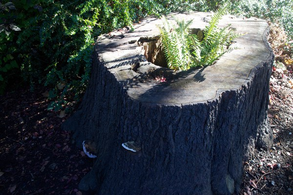 02 fern & fungus stump