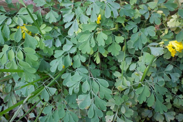 07 green leaves