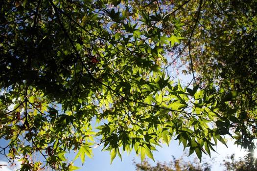 15 leaves and sky