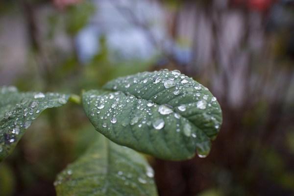 01 leaf drops