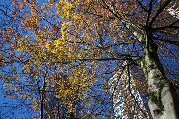 03 autumn leaves