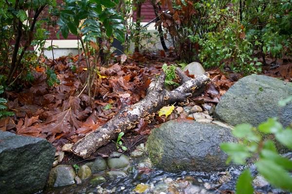 08 fungus log